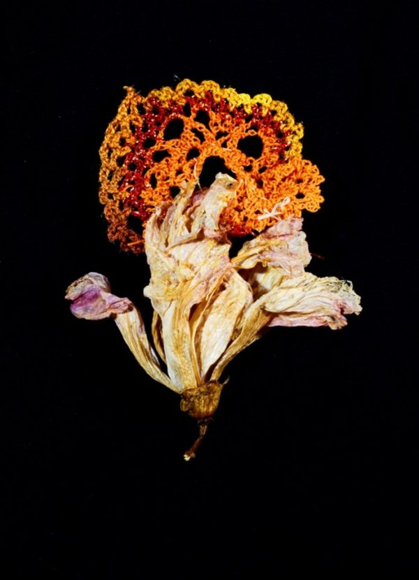 Yael Sapir, flame flower, 2018, found bloom and colored natural threads